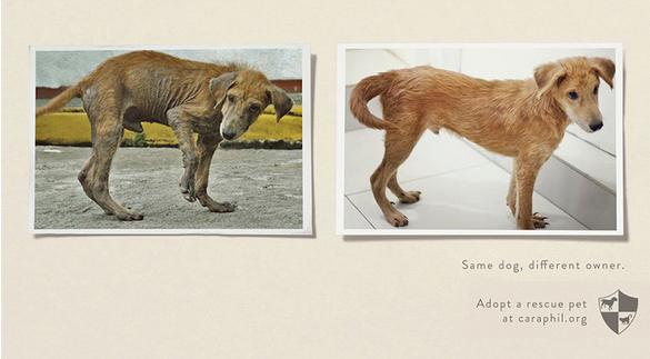 5. Aynı köpek, farklı sahip.