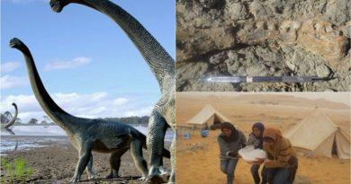 Afrika'da yeni bir tür dinozor bulundu!