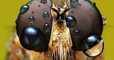 Böceklerde 14.000 göz olduğunu biliyor muydunuz?